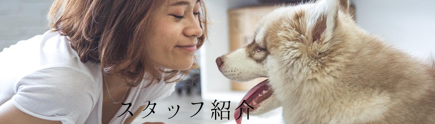 動物病院の獣医や看護師、トリマーの紹介
