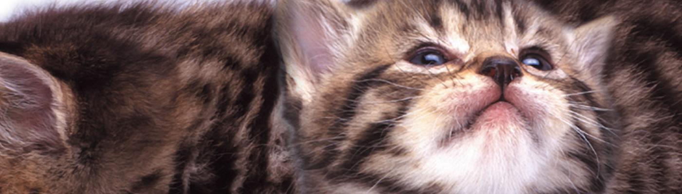 犬、猫、鳥、ウサギ、フェレット、ハムスターなどの小動物の他、牛、馬、豚などの産業動物を診察します